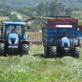Triple A Beef farming